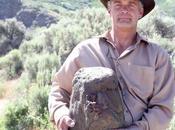 Sasquatch Pareidolia