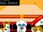 Rise Children China: DOGS!