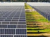Subsidy Cuts Spanish Renewable Energy Verge Bankruptcy