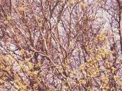 Spring Bulbs Blossom