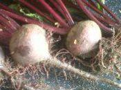 Beetroot: Harmless Spawn Satan?