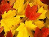 Autumn Upon Does Your Fragrance Exude Fall?