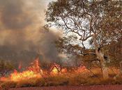 Early Start Bushfire Season Spell Hits Australia