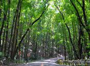 Bilar Man-made Forest: Sheer Heaven Earth