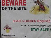 Fight Against Dengue Enlists Genetic Engineers