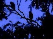 Black Night S.J. Strayhorn