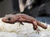 Featured Animal: Gecko