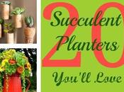 Succulent Planters You'll Love