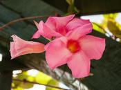 Hawaii Flowers Plant Life