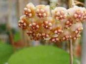 Honey-Sweet Blossom