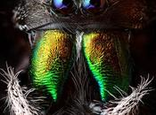 Amazing Diversity Animal Life