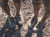 Mud, Sweat Beers