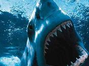 Shark Attack Ashdod Coast