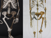 Answers Genesis Claim Australopithecus Fossil Human!