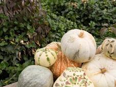 Decorate Pumpkins with Succulents