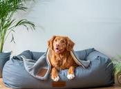 Tips Raising Dog: Basics Owners Need Know