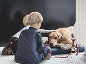 Ways Honor Your Deceased Dog's Memory