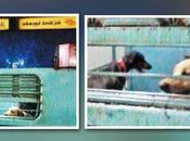 Dog's Convenient Travel Mangalore Express; Passengers