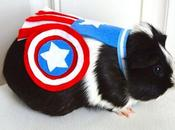 Adorable Costumes Turns Hamsters Guinea Pigs Into Superheroes
