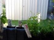 Thrift Finds: Veggie Seedlings School Plant Sale