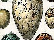 Purpose Bird-Egg Coloration