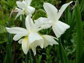 Bulb Plant
