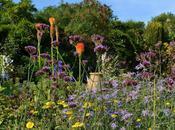 Wordless Wednesday Denmans Garden, West Sussex