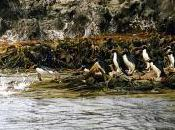 Featured Animal: Crested Penguin