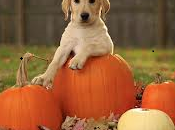 Doggie Trick-or-Treat Tips: Have Safe Halloween with Your Hound
