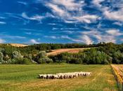 Italy Growing Organic-social Farming