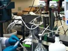 Pilot Project Test Energy Recovery Process From Wastewater Nitrogen