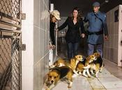 Vivisection Brazil Shuts Down Permanently After Activists Liberate Beagles