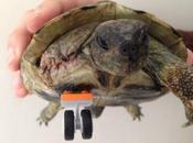 Three-Legged Tortoise Gets LEGO-Inspired Prosthetic