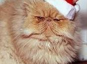 Christmas Crazies Upon