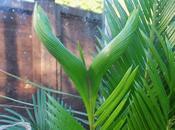 Favourite Plant Week Cycas Revoluta