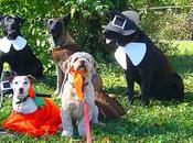 Most ADORABLE DOGS Dressed Thanksgiving Costumes!
