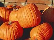 Holiday Pumpkin Cream Recipe