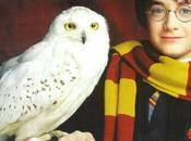 """Harry Potter Snowy Owls """"being Culled Airport Stop Them Endangering Planes"""""""