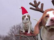 SHOCKINGLY FUNNY: DOGS Stole Christmas!