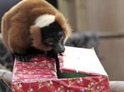 World's Best Images Animals Opening Presents