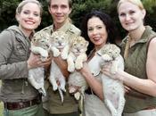 White Liger Cubs .....the Rarest Cats Born