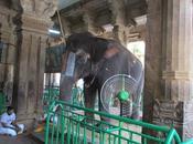 Srirangam Temple Elephant 'Andal' Tearful Parting Away Mahout Sridharan