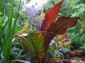 Exotic Garden Revival
