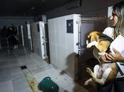 Cosmetic Animal Testing Banned Paulo, Brazil Following Raids