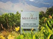 Mellasat Home White Pinotage