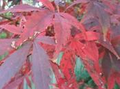 Foliage November 2011