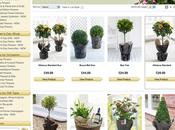 Ryan's Garden Summer Competition: Standard Plant