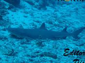 Opinions: Shark Finning Battle Between Culture Conservation
