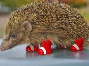 Hedgehog Slice (brownie Style)