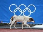 Russia: Helping Sochi Strays